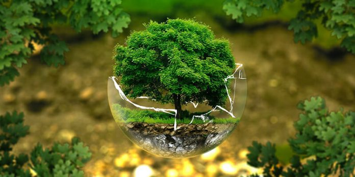 Tree in broken glass - business emissions